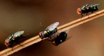 Vlieg - Ongediertebestrijding A-spect